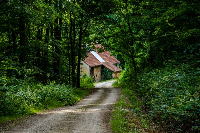 Liebfrauenberg Wald