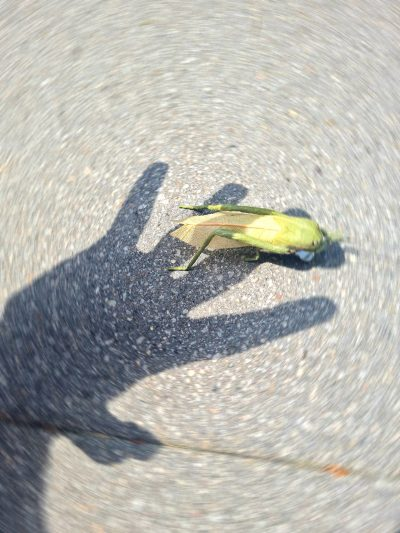 Abbild_Insektensterben